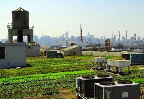 Brooklyn Grange is the World's Largest Rooftop Farm! | Inhabitat New York City | NEW YORK Nouveaux territoires de l'art et du développement durable | Scoop.it
