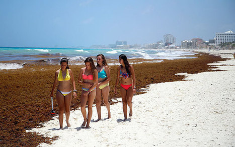Cancun beaches coated with thick seaweed   Global Aquaculture News & Events   Scoop.it
