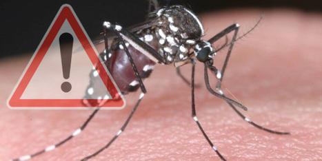 Chikungunya, dengue: un risque avéré en métropole, de mai à novembre | Toxique, soyons vigilant ! | Scoop.it