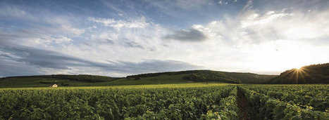 Quality over Quantity in Burgundy | Vitabella Wine Daily Gossip | Scoop.it