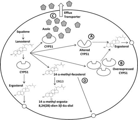 Resistance to antifungals that target CYP51 | Fungicide Hormesis | Scoop.it