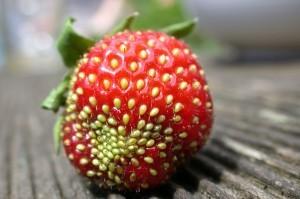 Un peu de bicarbonate de soude sur vos fraises? | Finis ton assiette | Scoop.it