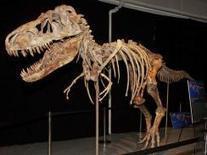 """Dinosaur dealer"" who smuggled Tyrannosaurus bones now faces prison. | Geology News | Scoop.it"