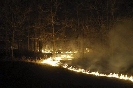 Northwestern Minnesota wildfire destroys several structures, claims 7,100 acres   Gov and Law Ashley   Scoop.it