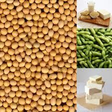 Prediagnosis Soy Food Consumption and Lung Cancer Survival in Women | FoodieDoc says: | Scoop.it