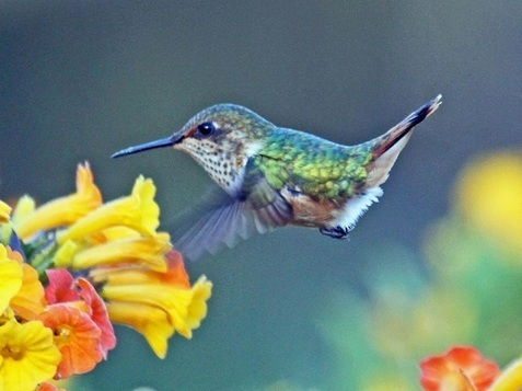 Is Google's Hummingbird Update Perfect for Small Business?