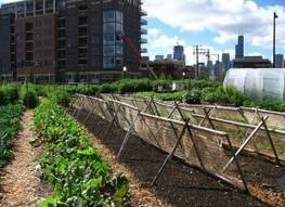 Applaud Chicago's Urban Farm Project - ForceChange | Sustainability, Urban Farming, Collaborative Consumption | Scoop.it
