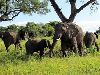 World's Largest Wildlife Conservation Area Established in Africa | Australia, Europe, and Africa | Scoop.it