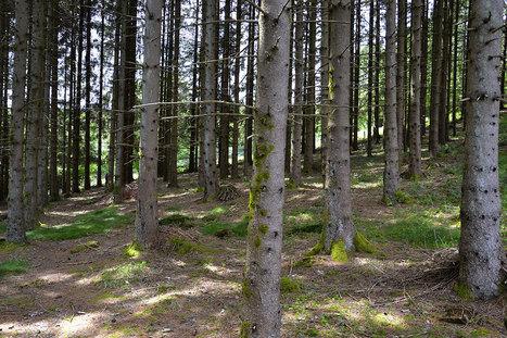 Une découverte sans précédent : les arbres partagent leur nourriture entre eux par leurs racines | Biodiversité & Relations Homme - Nature - Environnement : Un Scoop.it du Muséum de Toulouse | Scoop.it