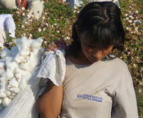 Daewoo: help end Uzbek cotton slavery - Walk Free | Sustain Our Earth | Scoop.it