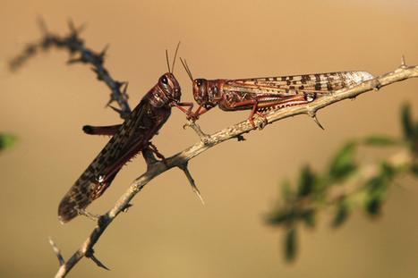 Des nuées de sauterelles envahissent le sud de la Russie | Biodiversité | Scoop.it