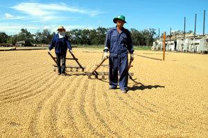 Coffee growers fight FDI business — TalkVietnam | Coffee Market | Scoop.it