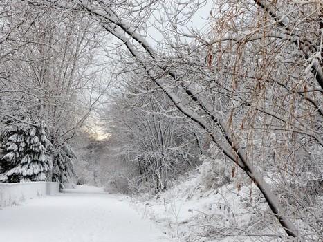 Hiver 2015 / 2016 Première neige - Paysages enneigés du Québec - Hiver au Canada - Hiver canadien | Faaxaal Forum Photos gratuite Faune et Flore | Scoop.it