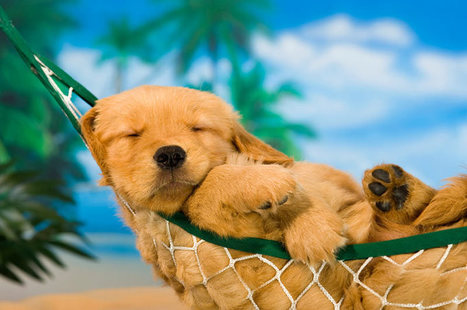 3 Actions for Marketers to Take During the Dog Days of Summer | B2B Marketing and PR | Scoop.it