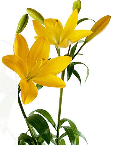 Flowers Perth delivery | Best Florist In Australia | Scoop.it