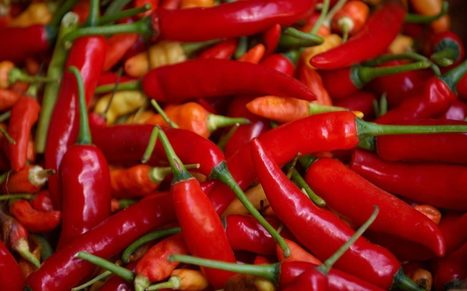 World's hottest chilli pepper goes on sale at Tesco: are you brave enough to try it?   i Cook   Scoop.it