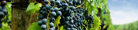 All about wine | Gustoperamore.com | Italian Fine Wines | Scoop.it