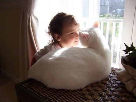 Kids with Autisim Get Help from Cats   Whole Earth Pets   Scoop.it