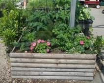 7 Things To Know About The Modern, Urban Gardener - Today's Garden Center Website - Article | Annie Haven | Haven Brand | Scoop.it