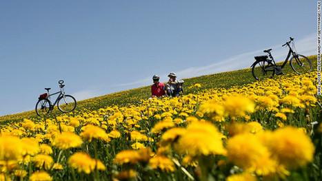 Dandelion tires? It's not a Beatles lyric, it's biotech | Erba Volant - Applied Plant Science | Scoop.it