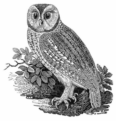 Historia de la ilustración: Thomas Bewick (1753-1828) | Banessa | Scoop.it