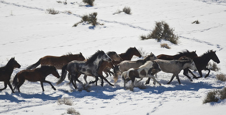 Iron County (Utah), BLM working on wild horse deal | Equestrian | Scoop.it