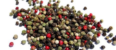 Diferencia y disfruta de los tipos de pimienta | PIMIENTA (Piper nigrum) | Scoop.it