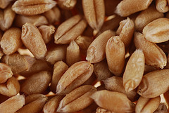 China: Government to boost seed industry | Research from the NC Agricultural Research Service | Scoop.it