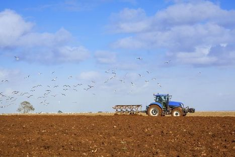 UK farmers 'can produce cheaper food due to leaving costly regulations of EU' - Farming UK News | Agrarforschung | Scoop.it