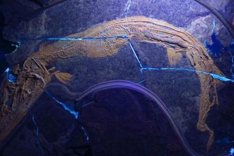 Un poisson préhistorique doté d'un intestin spiralé | Zones humides - Ramsar - Océans | Scoop.it