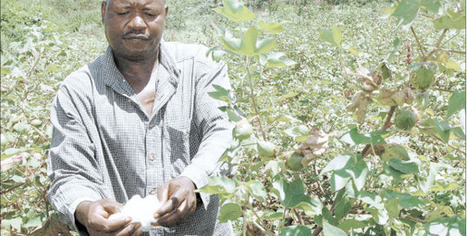 Uganda to market first GM crop in 2014  - News |theeastafrican.co.ke | MAIZE | Scoop.it