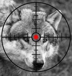 Loups tués en France au cours de la période 2015-2016 | FERUS | Chasse, Braconnage et Droits des Animaux | Scoop.it