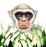 Caratinga, neotropical Bresilian forest - Douglas Quin | DESARTSONNANTS - CRÉATION SONORE ET ENVIRONNEMENT - ENVIRONMENTAL SOUND ART - PAYSAGES ET ECOLOGIE SONORE | Scoop.it