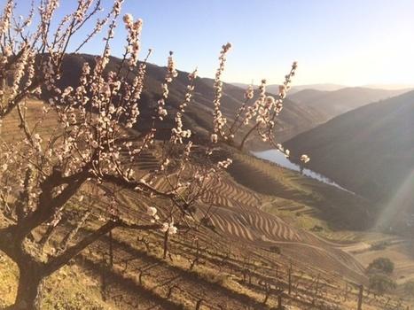 Lever de soleil printanier dans le Douro | Route des vins | Scoop.it