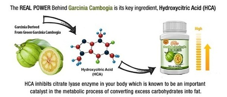 Want Know Deep Inofrmation About Garcinia Cambogia ? Then This Site is Perfect For You | Want Know Deep Inofrmation About Garcinia Cambogia ? Then This Site is Perfect For You | brittni aguilar | Scoop.it