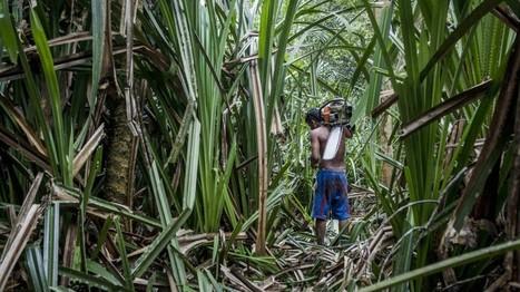 Umweltschutz – Palmöl ist das kleinere Übel - leider | Agrarforschung | Scoop.it