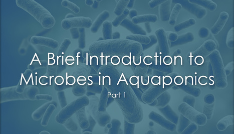 A Brief Introduction to Microbes in Aquaponics Systems | Aquaponics for Aquarists | Scoop.it