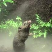 La guerra de los ratones cantantes | Animales | Scoop.it