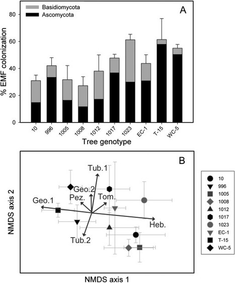 Tree genotype influences ectomycorrhizal fungal community structure: Ecological and evolutionary implications | MycorWeb Plant-Microbe Interactions | Scoop.it