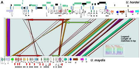 PLOS Pathog: An Immunity-Triggering Effector from the Barley Smut Fungus Ustilago hordei Resides in an Ustilaginaceae-Specific Cluster Bearing Signs of Transposable Element-Assisted Evolution (2014)   Plant Pathogenomics   Scoop.it