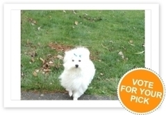 Commonly Confused Dog Breeds   petsblogs   Scoop.it