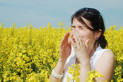 Can the Remedies for Allergies Really Be This Simple? | Elizabeth Street | CALS in the News | Scoop.it