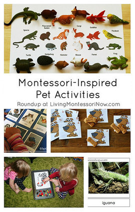 Montessori Monday – Montessori-Inspired Pet Activities | Montessori Inspired | Scoop.it