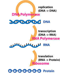 Synthetic biology challenges long-held hypotheses in translation, codon bias and transcription - Forster - 2012 - Biotechnology Journal - Wiley Online Library | SynBioFromLeukipposInstitute | Scoop.it