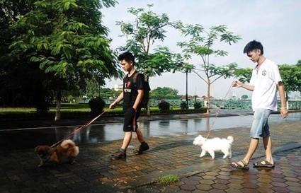 Phong trào giúp mọi người kiếm nhiều tiền - Thức ăn cho thú cưng | nanapet | Scoop.it