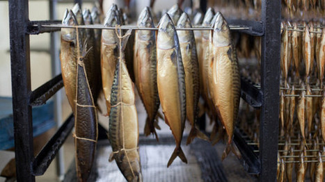 FVO finds shortcomings in Dutch fish products control - FoodQualityNews.com | FOOD TECHNOLOGY  NEWS | Scoop.it