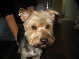 Harold - Posh Pets Rescue   celebrity pets   Scoop.it