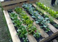 Recycle Pallets as Garden Planters | Back Yard Garden Projects | Scoop.it