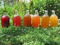 Beverages (Non-Alcoholic) - Lacto-Fermentation Series   Minga   Kombucha News   Scoop.it