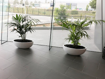 Indoor Plants Melbourne: Indoor Plants to Give Natural Tint in Melbourne | Foliage Indoor Plant Hire | Scoop.it